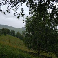 Маральник-ферма 2