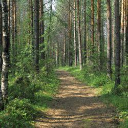 Продам 70га земли с лесом 6