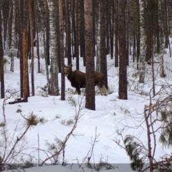 Продам 70га земли с лесом под охот.угодья или другое 5