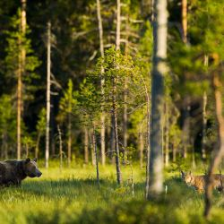 Продам 70га земли с лесом под охот.угодья или другое 2