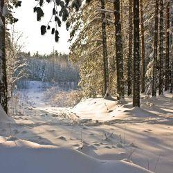 Продам 70га земли с лесом под охот.угодья или другое 4