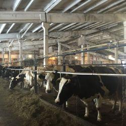Пищевое производство. Откорм бычков 1