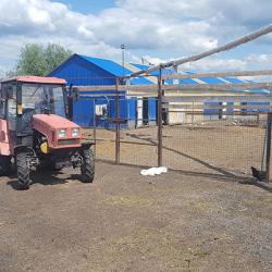 Молочный завод и ферма в собственности в МО 1