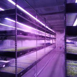 Инвестиции в действующее производство зелени на вертикальных фермах 5