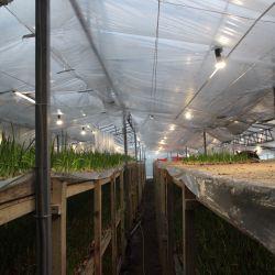 Выращивание цветов и грибов в теплице 3