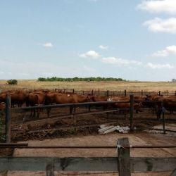 молочно-товарная ферма 3