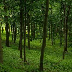 Аренда леса, лесоперерабатывающие предприятие 1