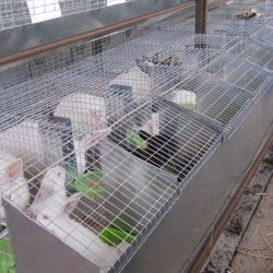 Кроликоферма 2