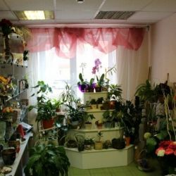 Салон цветов 1