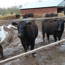 Сельскохозяйственное предприятие по профилю  «мясное животноводство»   1