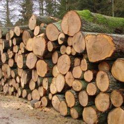 Цех по деревообработке. С налаженным сбытом