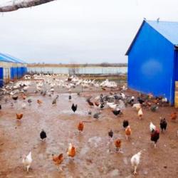 Молочный завод и ферма в собственности в МО 3