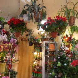 Цветочный бизнес с помещением в собственности 6