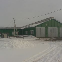 Действующая мини ферма КРС молоко 1