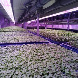 Инвестиции в действующее производство зелени на вертикальных фермах 6
