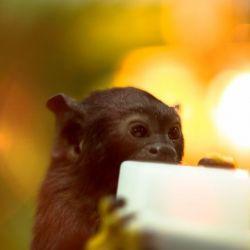 Контактный зоопарк 4
