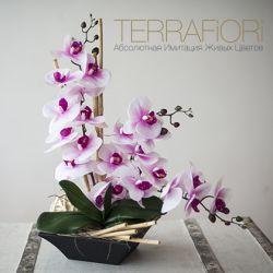 Terrafiori 4