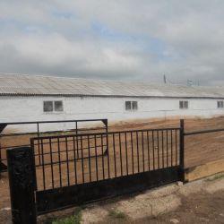животноводческая ферма 2