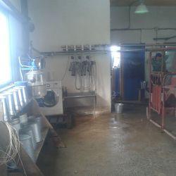 Действующая мини ферма КРС молоко 2