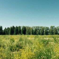 Продам земельный участок 5,3 га в пригороде г.Тюмени