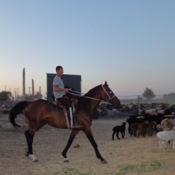 овце ферма Эдильбай