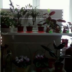 Цветочный бизнес 1