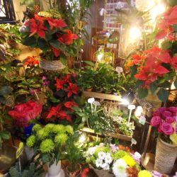 Цветочный бизнес с помещением в собственности 5