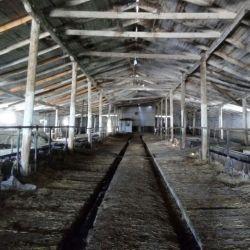 молочно-товарная ферма 4