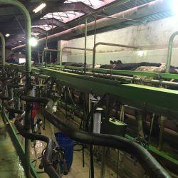 Пищевое производство 3