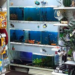 Успешный зоомагазин с прибылью 80 тыс.руб. 2