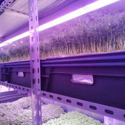 Инвестиции в действующее производство зелени на вертикальных фермах 4