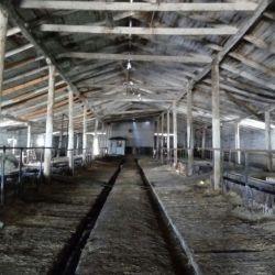 молочно-товарная ферма 2