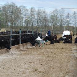 Сельскохозяйственное предприятие по профилю  «мясное животноводство»   2
