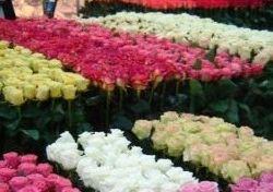 Цветочный магазин  1
