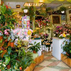Продаю салон цветов с гарантированной прибылью 1