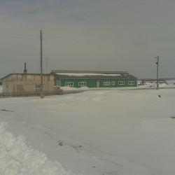 Действующая мини ферма КРС молоко 3