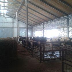 Действующая мини ферма КРС молоко 4