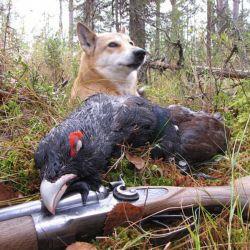 Продается охотничье хозяйство заимка 6
