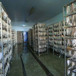 Производство рыбной продукции и снеков 4
