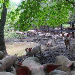 Фермерское хозяйство в Рязанской области 5