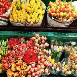 Цветочный салон в аренду