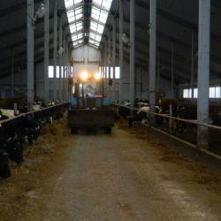 Продажа хозяйства, молочное производство 1