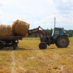 Фермерское хозяйство в Рязанской области 1