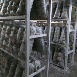 Площадка для выращивания грибов Вешенка 2