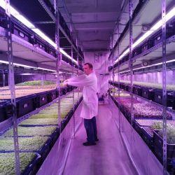 Инвестиции в действующее производство зелени на вертикальных фермах 3