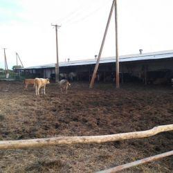 Действующая ферма 5