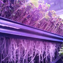 Инвестиции в действующее производство зелени на вертикальных фермах 1