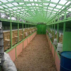 Кролиководческая ферма 3