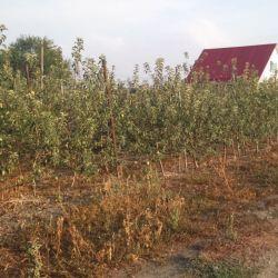 Сельхоз бизнес на участке 12 га 4