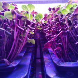 Инвестиции в действующее производство зелени на вертикальных фермах 2